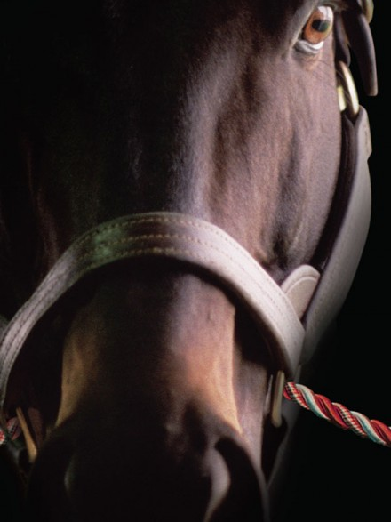 The Racing Club – Young Elite Lifestyle, Horse Ownership Experience (Advertisement Design)